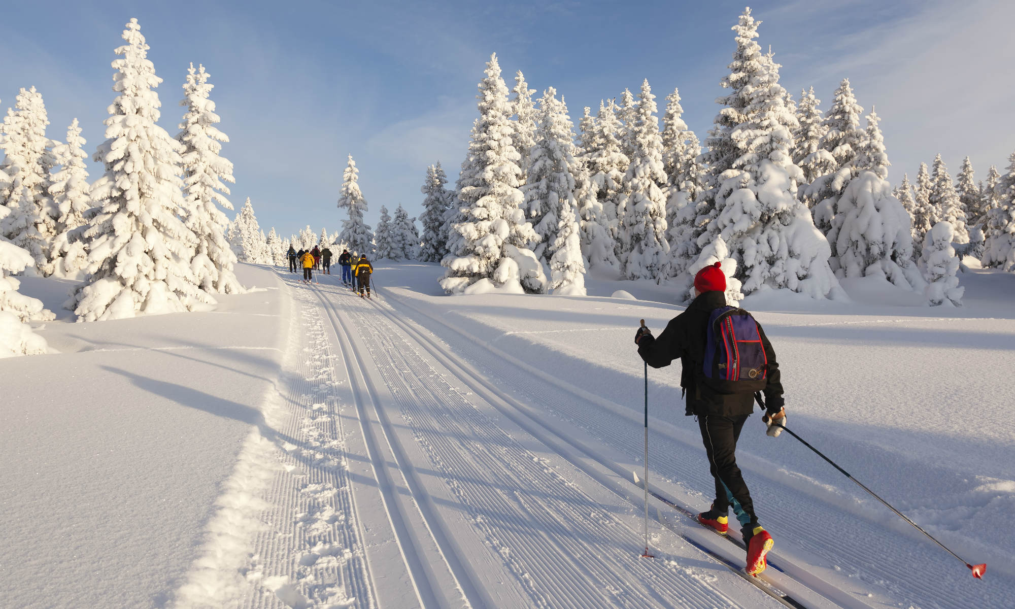 Eine Gruppe von Langläufern fährt auf einer sonnigen, verschneiten Loipe.