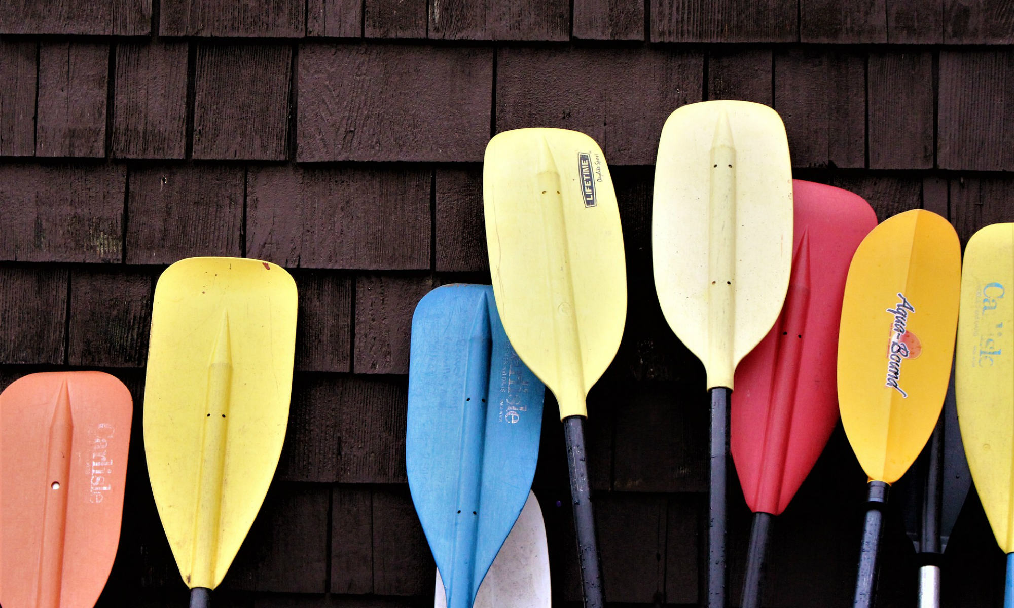 A number of paddles in different colours leaning against a wall.