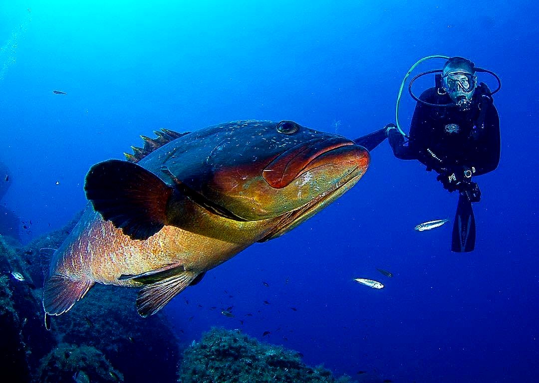 A diver observes a fish in the sea of Mallorca.