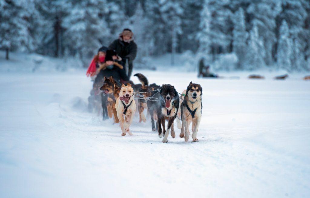 Après des heures passées sur les pistes pour apprendre à skier à Avoriaz, une famille profite d'une balade en chiens de traîneau.