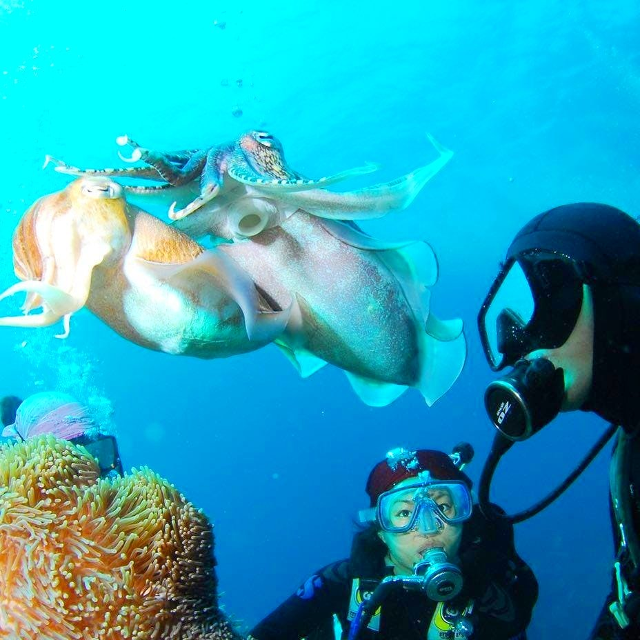 Zwei Taucher treffen beim Tauchen auf den Kanarischen Inseln auf einen Oktopus.