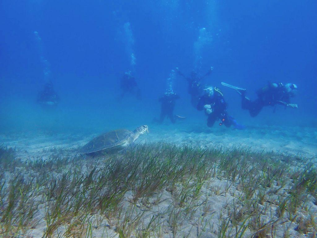 Eine Gruppe von Tauchern stößt beim Tauchen auf den Kanarischen Inseln auf eine Meeresschildkröte.