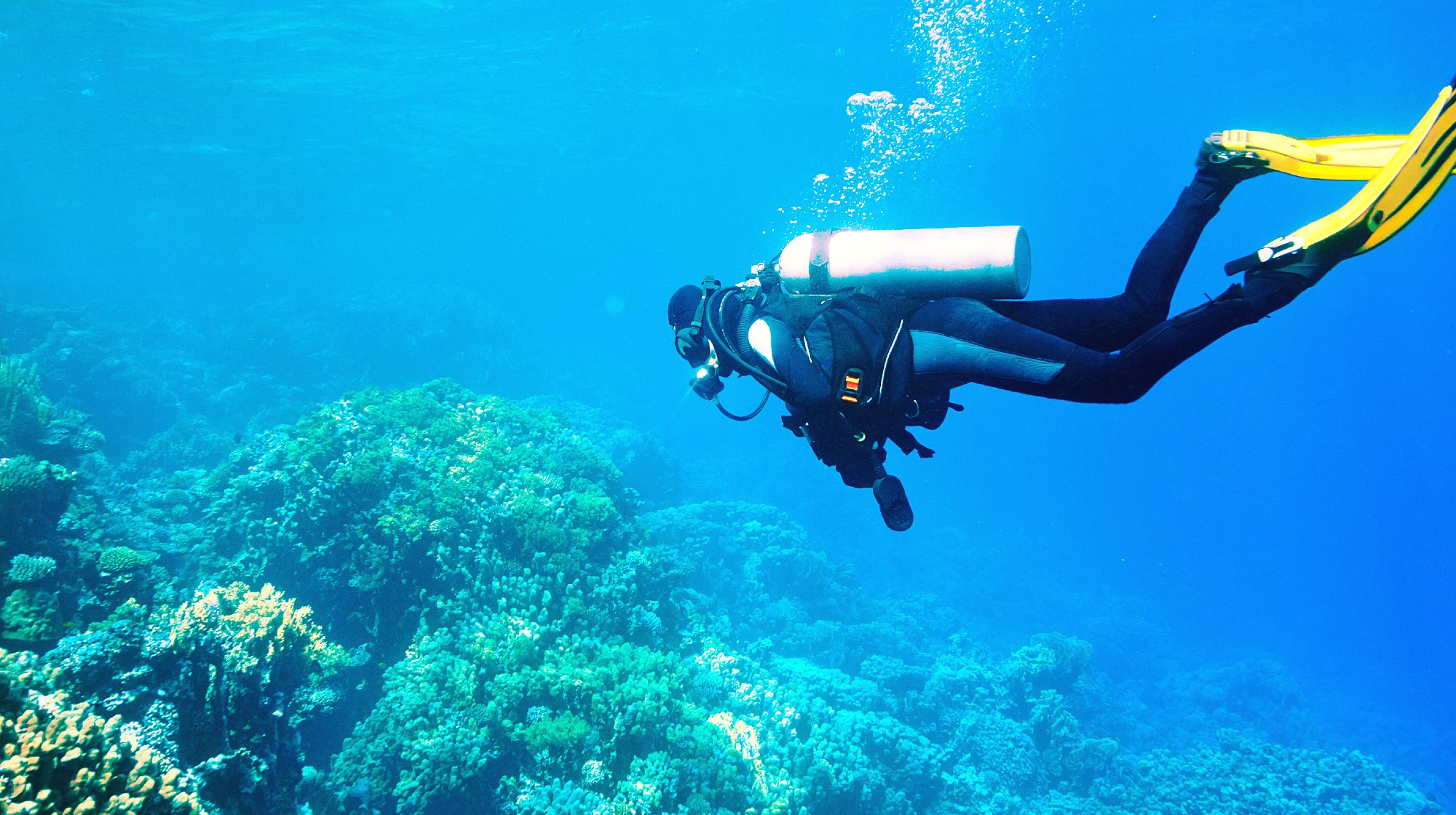 A person scuba diving on the Canary Islands.
