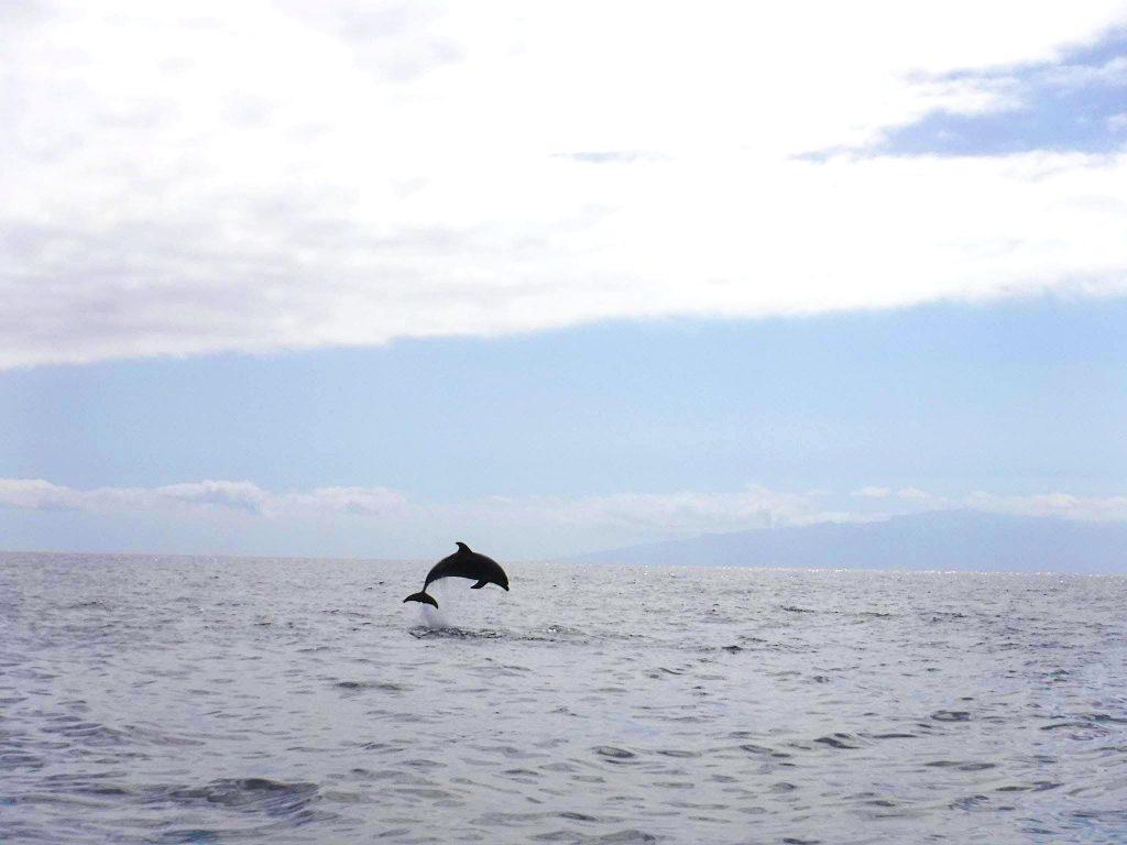 A dolphin makes a spectacular jump off the Teenrife coast.
