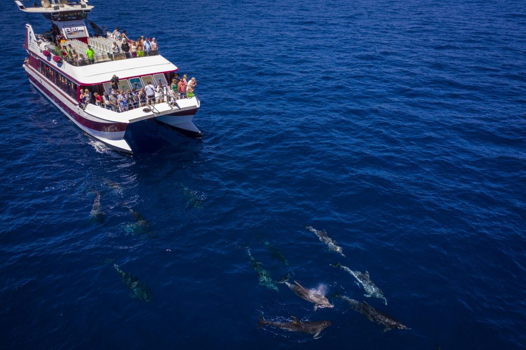 Cetaceans swim in front of the glass-bottomed catamaran.