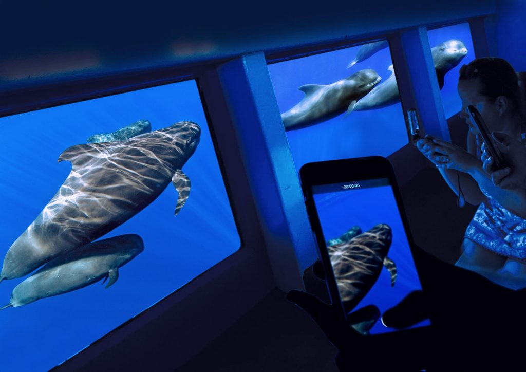 Many cetaceans can be watched at once thanks to the glass bottom boat from Tenerife.