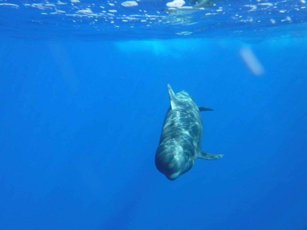 Delfine und Wale auf den Kanarischen Inseln zu beobachten ist ein Traum, der schon bald auf einer unserer Touren in Erfüllung gehen kann.