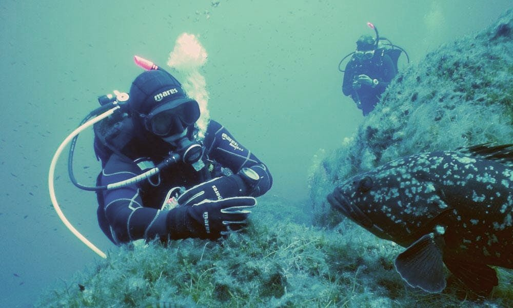 When scuba diving in Spain, one might come across a grouper or two.